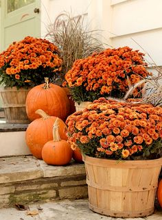 Fall porch decorating. I love mums!