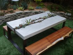 The is so great! Formed concrete table with a growing streak and sliced wood seating  --  by Five Feet from the Moon in Santa Cruz, CA