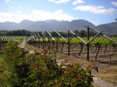 Goedemoet wine farm and country inn at Paarl South Africa Western Cape