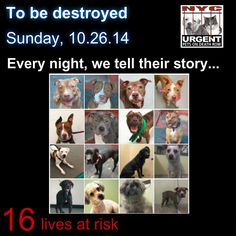 TO BE DESTROYED: 16 Dogs to be euthanized by NYC ACC- SUN. 10/26/14. This is a HIGH KILL shelter group. YOU may be the only hope for these pups! ****PLEASE SHARE EVERYWHERE!!! To rescue a Death Row Dog, Please read this: www.urgentpetsond... To view the full album, please click here: www.facebook.com/..