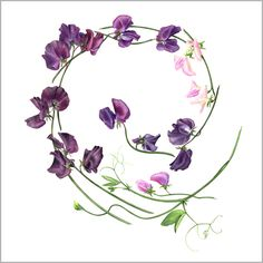 Top tips for botanical painting from Billy Showell - How To - Artists & Illustrators - Original art for sale direct from the artist Sweet Pea Tattoo, Botanical Drawings, Botanical Art, Plant Illustration, Botanical Illustration, Small Flowers, Beautiful Flowers, Wild Flowers, Flower Tattoo Shoulder