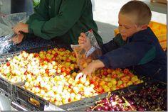 Farmers Market – Jackson, Wyoming