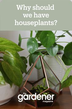 The 'indoor plants are cool' trend actually has some great benefits besides helping us gain more followers. The science behind indoor plants shows how living decor can greatly benefit your mental health and wellbeing. Read more about the benefits with our article. #houseplants #indoorplants #gardening #home #decor #science #benefits Benefits Of Indoor Plants, Mental Health And Wellbeing, Houseplants, Gain, Followers, Gardening, Science, Canning, Decor