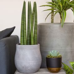 Succulents and green plants. Create an indoor jungle with texture and colour. Add green to any space. These on trend house plants will make you happy! Echeveria, Green Plants, Indoor Plants, House Plants, Canopy, Are You Happy, Cactus, Planter Pots, Floral Design
