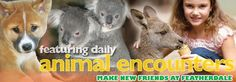 Featherdale Wildlife Park, Free All Day Koala Encounters - Cuddle up to a koala and hand feed a kangaroo at anytime of day