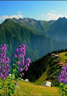 Mountains, houses and flowers in Karadeniz (Black Sea Region), North Turkey Turkey Tourism, Turkey Travel, Beautiful World, Beautiful Places, Trabzon Turkey, Turkey Photos, Exotic Places, Black Sea, Belleza Natural