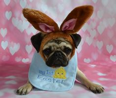 Boo Lefou The Pug Puppy First Easter