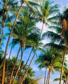 Lost in a #palm #paradise.  A #skyward view of #Coconut #Beach via @jeancarlo_sandoval! #CostaRicaExperts #CostaRica #TGIF