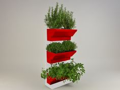 Indoor Herb walls a solution to grow herbs in tidied and spectacular conditions in your kitchen or at your garden. Using fresh and living herbs not only good for healthy and tasty foods but for healthcare and home cosmetics, like facemask or herbal teas. http://goo.gl/xyqqV2 Details: white frame, white table, red plant's box 45×60 cm / 17,7×23,6 inches easy to fit water holder system