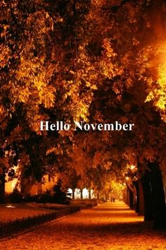 Hello November by Seasons Of The Year, Time Of The Year, Months In A Year, Four Seasons, 12 Months, Hallo November, November Born, Hello January, Sweet November