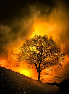 djferreira224:  Nature (Purification - Arbre de Feu) by Tiquetonne2067 on Flickr.