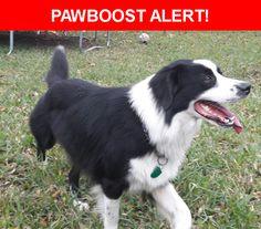 Please spread the word! Rambo was last seen in San Antonio, TX 78249.    Nearest Address: 78249 San Antonio Street, Bandera, TX, United States