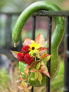 Hook a swan gourd over a balcony rail to create a hanging vase. Cut a 1- to 2-inch hole near the neck of the gourd, remove a bit of the pith, and insert mums, black-eyed Susans, and a length of Virginia creeper.