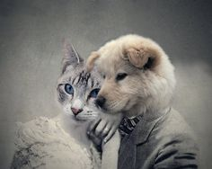 True Love - Vintage Dog and Cat Anthropomorphic Altered Photo Collage