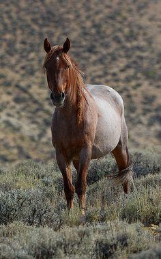 beautiful WILD HORSE                                                                                                                                                                                 More