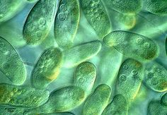 Image result for multi celled organisms macro