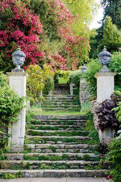 "blulilly: ""(via peto-garden-stairs-plinths.jpg × blulilly: ""(via peto-garden-stairs-plinths. Grey Gardens, Outdoor Gardens, Garden Stairs, Balcony Garden, Foliage Plants, Garden Cottage, Manor Garden, Parcs, Front Yard Landscaping"