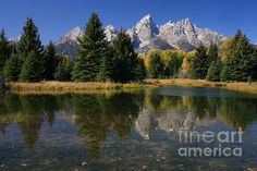 The magnificent scenery of Grand Teton National Park is reflected in clear, shallow water in this iconic American West image. Featuring the rugged beauty of the mountains with aspen trees in their autumn splendor, the reflection in the water doubles the scenic beauty.    Located in Wyoming, U.S.A., Grand Teton National Park is home to some of the most photogenic mountain scenery in the American West. Grand Teton mountain majestically rises 13,770 feet.