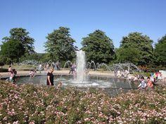 Rosengarten in der Rheinaue #Bonn http://www.ausflugsziele-nrw.net/rheinaue-bonn/
