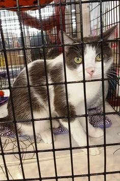 Barb is a one year old who came to AOH with her three kittens. They have all been adopted and now it is her turn. She is a petite gal who loves to snuggle and curl up in your arms. Barb is available for adoption at the Elk River Chuck & Don's Pet Food & Supplies.