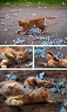 The kitten and the butterflies