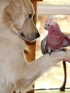 unlikely friends,Friends just the same. Animals And Pets, Baby Animals, Funny Animals, Cute Animals, Unusual Animals, Animals Beautiful, Pet Dogs, Dogs And Puppies, Doggies