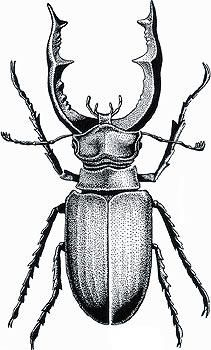Galería | Cultura Galega | Cultura Gallega Beetle Tattoo, Bug Art, Insect Art, A Level Art, Bugs And Insects, Body Art Tattoos, Art Inspo, Art Drawings, Illustration Art