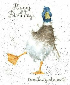 - Party Animal : Duck birthday card, party animal From Wrendale Designs Watercolor Bird, Watercolor Animals, Watercolor Paintings, Watercolor Projects, Watercolours, Happy Birthday Birds, Happy Birthday Greeting Card, Greeting Cards, Animal Paintings