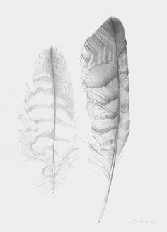 red kite feathers - rebecca john