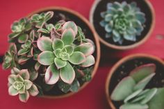 What Your Favorite Houseplant Says About You  - CountryLiving.com