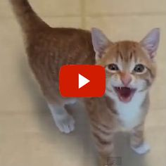 What Does Kitten Say? - feed me now!
