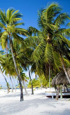 The gorgeous white sand beaches in the Florida Keys!  Click through to see what else you can expect in 6 of the most popular florida cities!