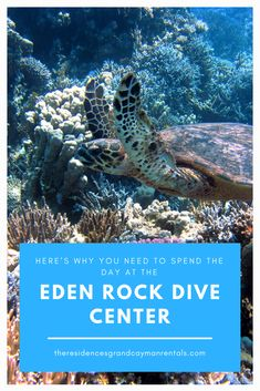 The turquoise water of the Caribbean hosts a whole underwater world waiting to be explored, and one of the best places to do it is at Eden Rock Dive Center. Eden Rock, Grand Cayman, Turquoise Water, Underwater World, Video Photography, Snorkeling, Scuba Diving, The Good Place, Caribbean