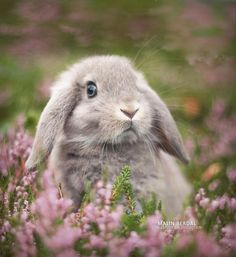 Animals And Pets, Funny Animals, Cute Baby Bunnies, Pet Rabbit, Cute Little Animals, Hamsters, Cute Animal Pictures, Pet Birds, Animals Beautiful