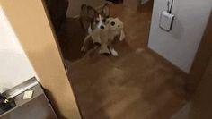 Dog Tags Funny Gif #2391 - Funny Dog Gifs| Funny Gifs| Dog Gifs