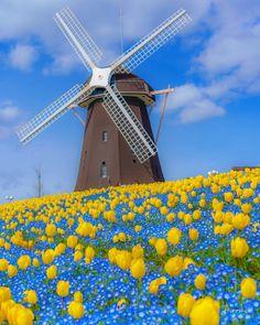 Beautiful Nature Scenes, Beautiful World, Beautiful Landscapes, Beautiful Places, Old Windmills, Way To Heaven, Scenery Photography, Aesthetic Japan, Flower Landscape