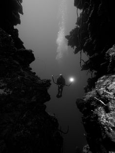 Photograph Hanging around by Ellen Cuylaerts on 500px  It was at Lea Lea's lookout, Little Cayman, Bloody Bay Wall, great diving!