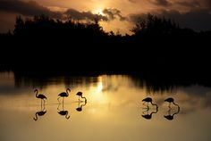 Flamingos by Fabroo on 500px