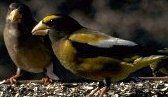 North American Bird Feeding Chart - how to attract different types of birds to your yard.