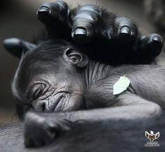 baby nap