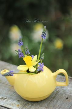 Blue Hortensia in a little yellow teapot ♥ Lavender Cottage, Yellow Cottage, Mellow Yellow, Blue Yellow, Yellow Teapot, Happy Spring, Spring Has Sprung, Plantar, Shades Of Yellow