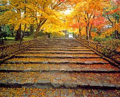 Image: Fall colors and stone steps at Ryoanji Temple, Kyoto, Japan. (© Murat Taner/Getty Images)