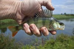 Having Trouble Catching Fish Then Read On For Some Great Tips! – Fishing Information