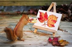 Amateur leaf-painting. | 9 Things The Squirrels Are Up To These Days