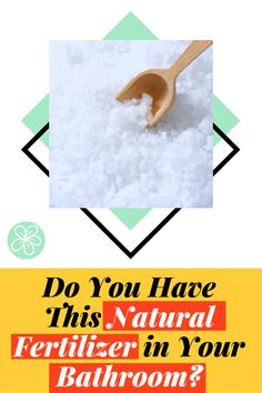 Have you ever wondered what you could do with Epsom Salt? You probably have it in your bathroom! Epsom salt is the perfect all-natural fertilizer, learn how to use Epsom salt for your garden!! Follow The Blossoming Gardener on Instagram @/theblossominggardener! #theblossominggardener #gardenblog #blog #gardening #growyourownfood #plants #gardeningforbeginners #epsomsalt #natural #naturalgardening #balconygardening #lazygardening #bathsalts Epsom salt for garden Epsom salt on plants