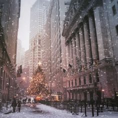 New York City, Christmas tree, financial district . (NY Through the Lens - New York City Photography) Cozy Christmas, Christmas Lights, Christmas Time, White Christmas Snow, Christmas Ideas, Christmas Quotes, Christmas Pictures, Christmas Inspiration, Christmas Decor