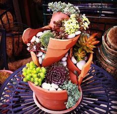 broken+pot+succulent+garden | You can plant the garden any way you like, but as the flowers grow in ...