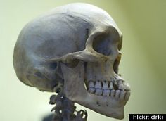 Americans' Heads Getting Bigger In Size, Changing Shape, Anthropologists Say