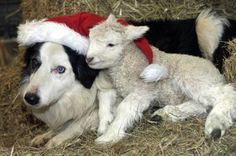 unusual animal pairs christmas | ANIMAL BUDDIES 450 (Pic:Richard Austin) ANIMAL BUDDIES 450 (Pic ...