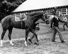 Secretariat and his team, including his legendary exercise rider, Jim. Horse Hay, Derby Horse, The Great Race, Triple Crown Winners, Huge Dogs, Sport Of Kings, All About Horses, Thoroughbred Horse, Racehorse